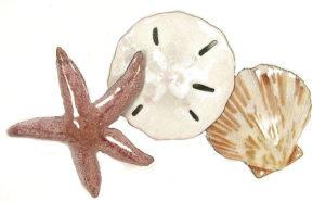 Starfish, Sand Dollar & Seashell