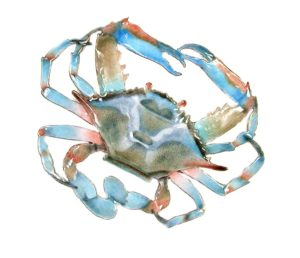 bovano blue crab