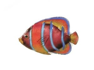 Single King Angelfish (purple w/orange stripes)