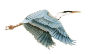 Heron, Flying Single