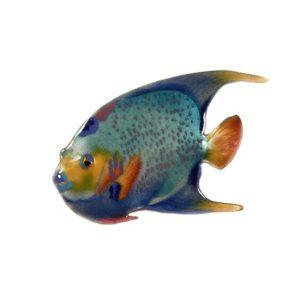 Queen Angelfish, Single