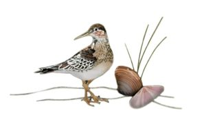 Sandpiper with 2 Clam Shells copper wall art by bovano of cheshire